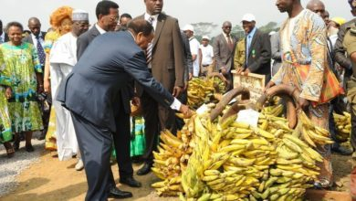 Photo of Agropastoral : 190 000 millions FCFA pour appuyer 26 organisations paysannes