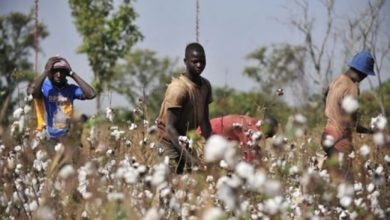 Photo of Filière coton : 2 250 tonnes d'engrais pour la prochaine campagne