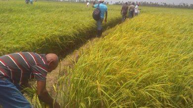 Photo of Financement : 21 milliards de FCFA pour les rizières du Logone et Chari