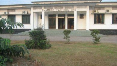 Photo of Chambre d'agriculture: où en est-on avec la banque agricole ?