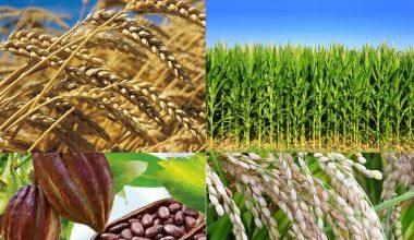 Photo of La bourse des matières premières agricoles aux oubliettes