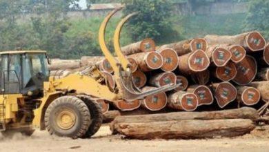 Photo of La place du bois dans l'économie camerounaise