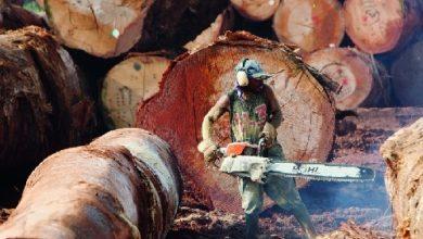 Photo of Taxe d'abattage: le bois camerounais encore plus cher en 2019