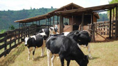Photo of Secteur agropastoral : 910 millions FCFA pour des infrastructures agropastorales