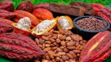 Photo of Cacao-café: les objectifs du gouvernement à l'horizon 2020 ne seront pas atteints