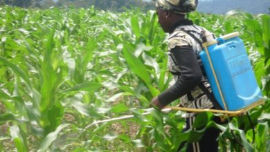 Photo of Agriculture: la campagne agricole 2019 est sur les rails