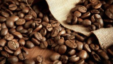 Photo of Café Robusta : vers une chute des recettes