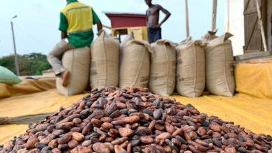 Photo of Géants du cacao, la Côte d'Ivoire et le Ghana suspendent leurs ventes