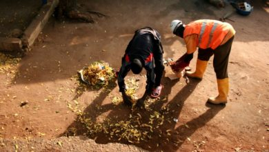 Photo of Ramassage des ordures : trois entreprises dament le pion à Hysacam à Douala