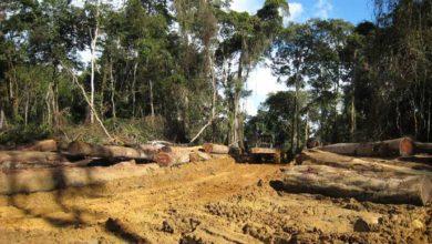 Photo of Le Cameroun fait 32 milliards de recettes forestières au cours de l'exercice 2018
