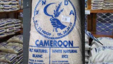 Photo of Le Cameroun projette une production de 1 000 tonnes de riz marchand en 2024