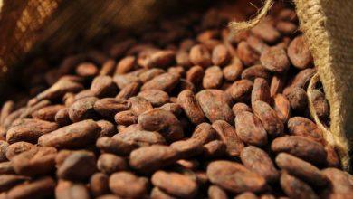 Photo of Nouvelle hausse du prix du cacao camerounais à 1200 F CFA le KG