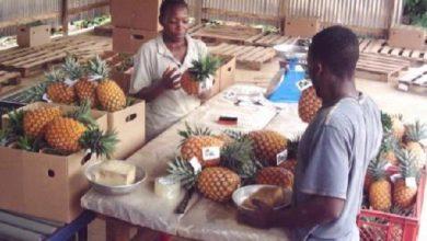 Photo of Les Pme camerounaises livrés à la merci du Covid-19