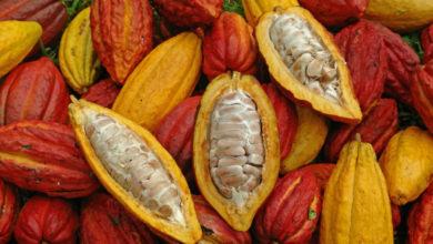 Photo of Le prix du cacao rebondit après une baisse