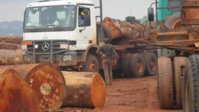 Photo of Les exploitants forestiers demandent une baisse des taxes d'abattage