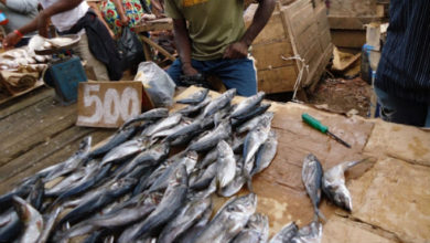 Photo of L'importation du poisson en baisse de 17,7% en 2019 au Cameroun
