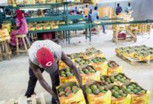 Photo of Gestion des approvisionnements : les entreprises se tournent vers les solutions locales