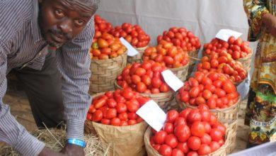Photo of Réouverture des frontières : de belles perspectives pour la tomate camerounaise