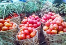 Photo of Tomates en Fruit : les prix bas peuvent-ils durer ?