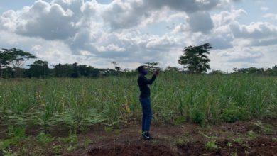 Photo of Dimako : Orient's Sugar & Industry veut produire de l'électricité à base des déchets de canne à sucre