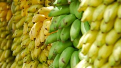 Photo of Cameroun : les exportations de banane baissent de 25% en juillet 2020