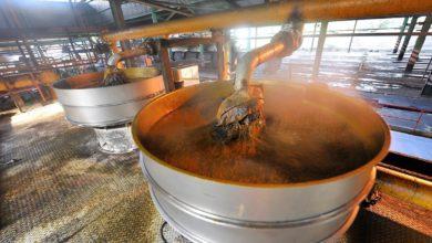 Photo of Le Cameroun veut mettre sur pied trois usines d'extraction d'huile de palme