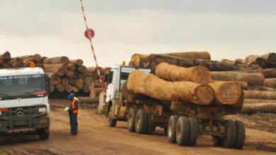 Photo of Exportations de bois : quand l'illégalité prend corps