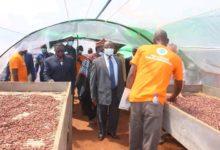 Photo of Cacao : Deux nouveaux centres d'excellence de traitement post-récolte voient le jour
