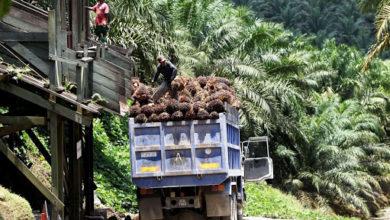 Photo of La Socapalm réalise un bénéfice de 9 milliards au 1er semestre 2020, en hausse de 13%