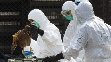 Photo of Aviculture : le Minepia suspend l'importation de volailles et produits dérivés